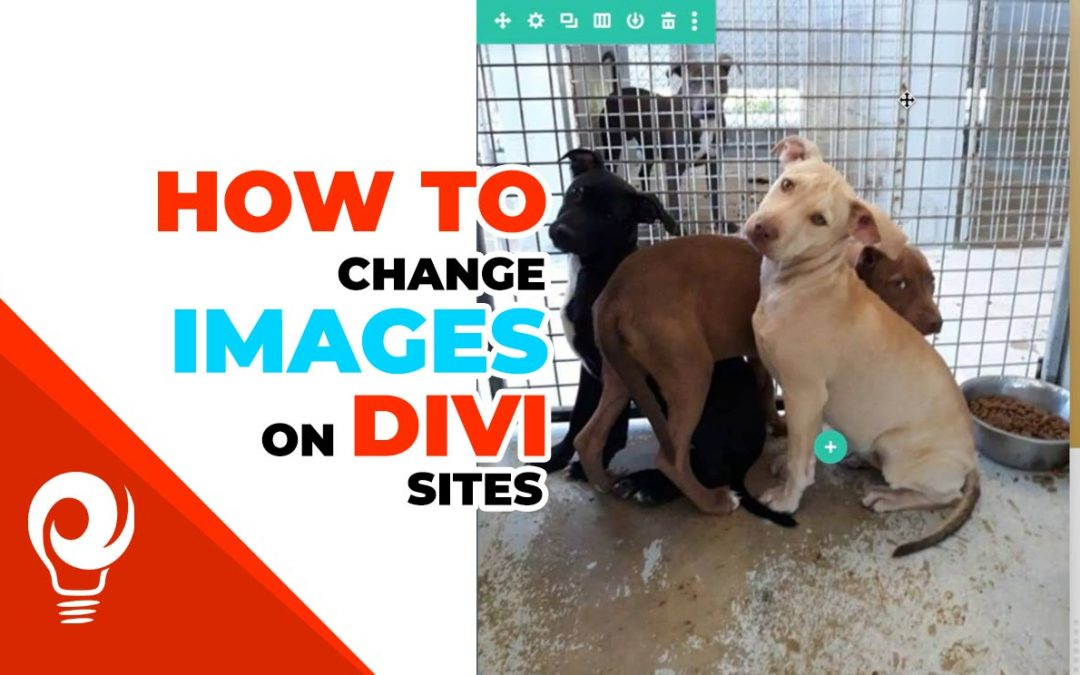 How to change images on Divi built websites